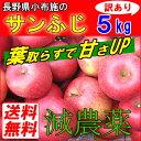 長野産 葉とらず りんご 訳あり 5kg 送料無料 リンゴ 規格外 サンふじ