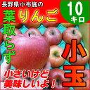 信州 小玉りんご 10kg 訳あり 長野産りんご アウトレット リンゴ サンふじ