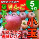 長野産りんご★訳あり 小玉5kg 信州産 葉取らず リンゴ【送料無料】