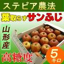【送料無料】 山形 ステビア農法 葉取らず サンふじ りんご 5キロ 家庭用 高糖度