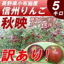 【送料無料】 訳あり 長野産 信州 りんご 秋映 5kg 規格外【9月下旬〜】