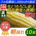 【送料無料】減農薬 八ヶ岳 生とうもろこし 10本入(ギフト箱) 糖度20度以上 激甘 朝採れ高原トウモロコシ