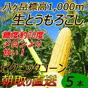 【送料無料】減農薬 八ヶ岳 生とうもろこし 5本入(ギフト箱) 糖度20度以上 激甘