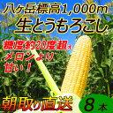 【送料無料】減農薬 八ヶ岳 生とうもろこし 8本入(ギフト箱) 糖度20度以上 激甘 朝採れ高原トウモロコシ