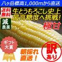 【送料無料】減農薬 八ヶ岳 生とうもろこし 訳あり 14本入 糖度20度以上 激甘 朝採れ高原トウモロコシ