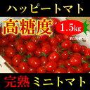 高知県 完熟 ハッピートマト (高糖度ミニトマト) 1.5kg 甘くておいしい!