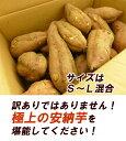 【送料無料】 種子...