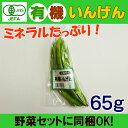 オーガニック 有機いんげん 80g 無農薬 豆 有機野菜