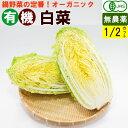 【送料無料】有機白菜 1/2カット(約800g) オーガニック 鍋野菜
