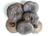 黒芝(黒霊芝) 乾燥自然体(原型霊芝) 1kg 送料無料