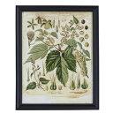 【お取り寄せ】AZUMAYA(東谷) アートパネル 植物画 | ART-115A