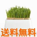 【送料無料】 HARIO 猫草栽培キット にゃんベジ 鉢+リフィル2パック