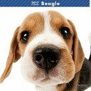 【6】2017年 国内版 THE DOG 壁掛け カレンダー ビーグル シール付き(2016年9月から17年12月) 犬種別 ザ・ドッグ ザドッグ