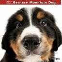 【6】2017年 国内版 THE DOG 壁掛け カレンダー バーニーズマウンテンドッグ シール付き