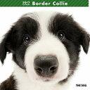 【6】2017年 国内版 THE DOG 壁掛け カレンダー ボーダーコリー シール付き(2016年9月から17年12月) 犬種別 ザ・ドッグ ザドッグ