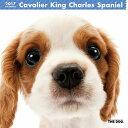 【6】2017年 国内版 THE DOG 壁掛け カレンダー キャバリア シール付き(2016年9月から17年12月) 犬種別 ザ・ドッグ ザドッグ