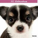 【6】2017年 国内版 THE DOG 壁掛け カレンダー チワワ シール付き(2016年9月から17年12月) 犬種別 ザ・ドッグ ザドッグ