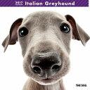 【6】2017年 国内版 THE DOG 壁掛け カレンダー イタリアングレイハウンド シール付き(2016年9月から17年12月) 犬種別 ザ・ドッグ ザドッグ