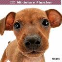 【6】2017年 国内版 THE DOG 壁掛け カレンダー ミニチュアピンシャー シール付き(2016年9月から17年12月) 犬種別 ザ・ドッグ ザドッグ