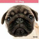 【6】2017年 国内版 THE DOG 壁掛け カレンダー パグ シール付き(2016年9月から17年12月) 犬種別 ザ・ドッグ ザドッグ