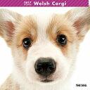 【6】2017年 国内版 THE DOG 壁掛け カレンダー ウェルシュコーギー シール付き(2016年9月から17年12月) 犬種別 ザ・ドッグ ザドッグ コーギー