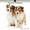 【3】2017年 国内版 THE DOG 壁掛け ミニ カレンダー シェトランドシープドッグ シール付き(2016年11月から17年12月) 犬種別 ザ・ドッグ ザドッグ シェルティ