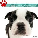 【6】2018年 国内版 THE DOG 壁掛け カレンダー ボストンテリア シール付き(2017年9月から18年12月) 犬種別 ザ・ドッグ ザド..