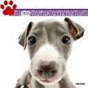 【6】2018年 国内版 THE DOG 壁掛け カレンダー イタリアングレイハウンド シール付き(2017年9月から18年12月) 犬種別 ザ・ドッグ ザドッグ