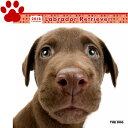 【6】2018年 国内版 THE DOG 壁掛け カレンダー ラブラドールレトリーバー シール付き(2017年9月から18年12月) 犬種別 ザ・ド..