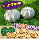 土台・おさえ お庭・ガーデン用品 かぼちゃウェイト【送料別】