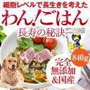 無添加・ドッグフード(わん!ごはん 長寿の秘訣 840g)免疫力・関節・骨・腰、病気になりにくい体質作りの為の犬のご飯