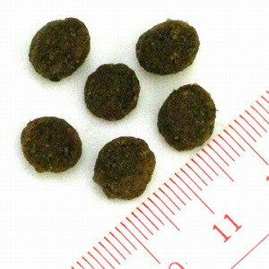 ブラックウッド パピー 7.05kg(ドック ペット用品 ドックフード 犬  ドッグ  ドッグフード  ペットフード 犬用品 ペット):ドッグパラダイスぷらすニャン