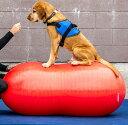 犬用バランスボール FitPAW ピーナッツ 50cmタイプ