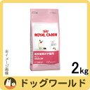 ロイヤルカナン 子猫用 キトン 2kg [2423]