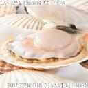 道東オホーツク産 3kg 15枚前後流氷の海で育った肉厚物ほたて!北海道ぎょれん安全証紙添付BBQ バター焼き 指定日不可