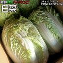 新鮮野菜 バイキング 白菜 Lサイズ 3-4玉入9-10kg 1玉約2-2.5kg 送料無料 ※沖縄は送料別途加算