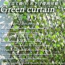 グリーンカーテン 緑のカーテン 日よけ