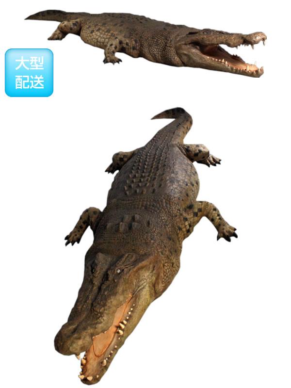 アニマルビッグフィギュアシリーズ【クロコダイル(ワニ)全長470cmD】(等身大フィギュア)