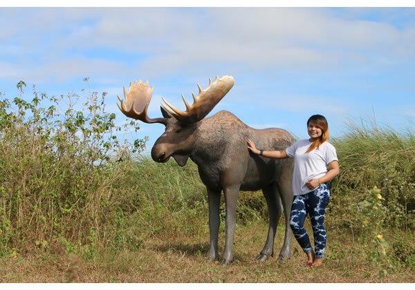 アニマルビッグフィギュアシリーズ【ビッグ ムース Moose(鹿)】(等身大フィギュア)