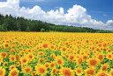 美瑛のひまわり畑(北海道) ジグソーパズル 風景 300ピース 26×38cm 03-872