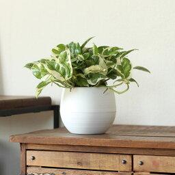 好評につき、期間延長!【ポイント2倍】コロン♪ 軽くて、育てやすくて、飾りやすい!暑さに強い!今からはコレ☆ポトス・エンジョイ丸?い植木鉢※鉢はプラスチックなので、お求めやすい価格ですよ!