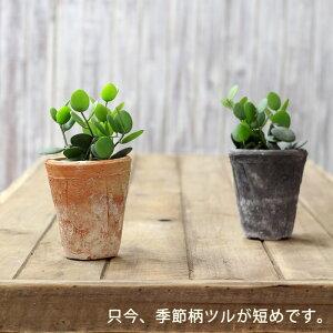 多肉植物 グリーン アンティーク テラコッタ