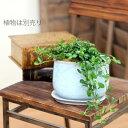 貫入加工がアンティークな風合いを演出!質感が面白い、セラミックストーン陶器鉢【幅17.5×行き9.5×高さ12.5cm】1001S mu※植物は商品に含まれません。