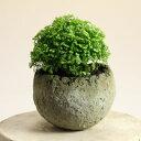 流木チップを混ぜることで風合いを高めました。和モダン植木鉢・球型S 高さ6cm bo0shko0 ※植物は商品には含まれません