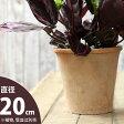 ナチュラル・アンティーク風 テラコッタ植木鉢直径20cm×高さ19cm【モスポット ※植物は別売り】