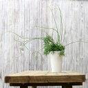【送料無料 希少品】年数が経過した存在感ある逸品名人・荒木さん推薦 リプサリス・ケレウスクラ【紐サボテン 観葉植物 ケレウスケラ】