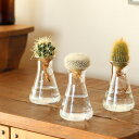 チョコン♪洗面台や、トイレの窓辺にもキュートフラスコでサボテンを楽しむSTYLE【フラスコと水耕用サボテンのセットです。(水栽培)】