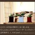 観葉植物が【特別に送料無料!】今が旬のホヤ・カルノーサを送料無料にて。