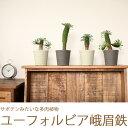 【35鉢限定】シュールな姿が愛らしい多肉植物ユーフォルビア峨眉鉄(がびてつ)×1