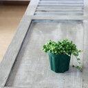RoomClip商品情報 - ぷりっプリで超可愛い、名人・磯部さんのグリーンネックレス2.5苗×1【観葉植物 多肉植物】